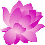 Lotus Flower. Beautiful illustration of a fresh lotus flower, isolated Royalty Free Stock Photos