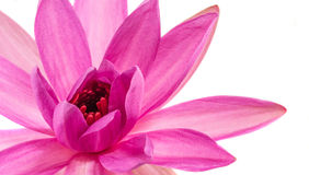 Lotus Flower Abstract Foto de Stock