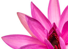 Lotus Flower Abstract II Photo libre de droits
