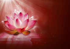 Lotus flower background. Nature theme and illustration Royalty Free Stock Photo