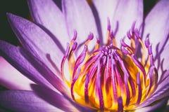 Lotus flower. Beautiful lotus flower vintage style Stock Images