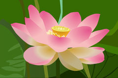 Lotus, Flower, Beauty, Beautiful Stock Image