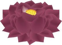 Lotus Flower Black Mauve illustration de vecteur