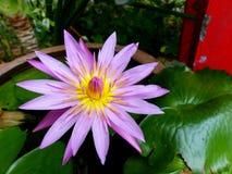 Lotus flower Stock Image