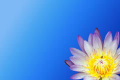Lotus flower on blue background Royalty Free Stock Images