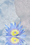 Lotus flower and Buddha Stock Image