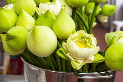 Lotus flower for buddhist people to respect Royalty Free Stock Photo