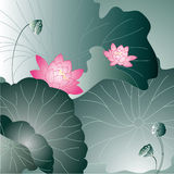Lotus flower card Stock Photography