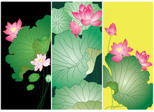 Lotus flower card Stock Image