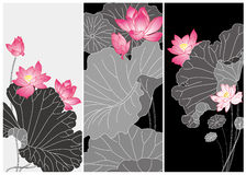 Lotus flower card Stock Images