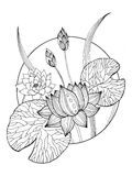 Lotus flower coloring book vector illustration Stock Images