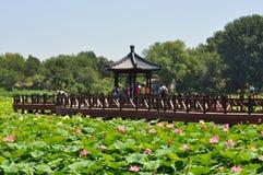 Lotus Flower Festival no parque de Yuanmingyuan Fotos de Stock Royalty Free
