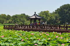 Lotus Flower Festival in Yuanmingyuan Park Royalty Free Stock Photos