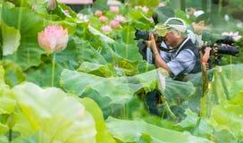 Lotus flower-Folk songs Stock Image