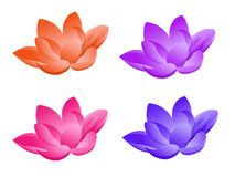 Lotus flower in four colors. In a white background vector illustration