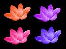 Lotus flower in four colors. In a black background royalty free illustration
