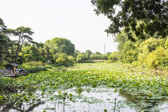 Lotus-flower garden Royalty Free Stock Photos