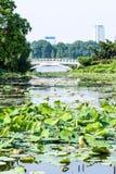 Lotus-flower garden and Yueying bridge Stock Photography