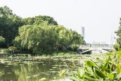 Lotus-flower garden and Yueying bridge Stock Image