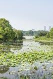 Lotus-flower garden and Yueying bridge Royalty Free Stock Image