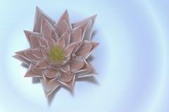 A lotus blossom Stock Photo