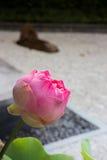 Lotus flower in gravel garden Stock Photography