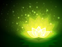 Lotus Flower Green Fotos de Stock Royalty Free