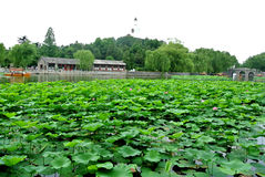 Lotus flower Green Garden  White Pagoda Royalty Free Stock Images