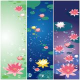 Lotus flower and water drop background. Lotus flower greeting card, water lily background Royalty Free Stock Photography