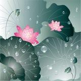 Lotus flower and water drop background. Lotus flower greeting card, water lily background Stock Photo