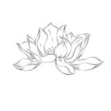 Lotus flower. Hand drawn illustration with stipple effect. Vinta. Ge Decorative Design Element. Clip art. Ideal for Card, Invitation Stock Photos
