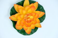 Lotus flower. An illustration of plastic lotus flower looks like real in a white background stock image
