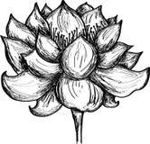 Lotus flower illustration Royalty Free Stock Photography