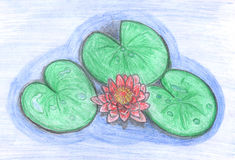 Lotus Flower In Water, Drawing Royalty Free Stock Photography