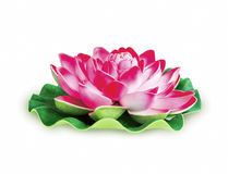 Lotus flower isolated Royalty Free Stock Photography