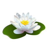 Lotus flower isolated Stock Photos