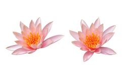 Lotus flower isolated on white Royalty Free Stock Image