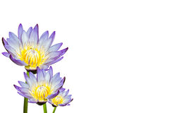 Lotus flower isolated on white background Stock Photography