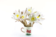 Lotus flower isolated on white background Royalty Free Stock Photo