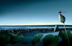 Lotus flower lake Stock Images