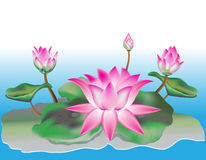 Lotus flower. With leaves and buds on the stem Royalty Free Stock Photos