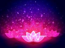 Lotus Flower Light Stock Photography