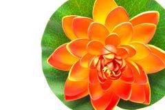 Lotus flower model Stock Image
