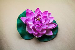Lotus flower model Royalty Free Stock Photography