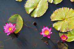 Lotus Flower nel buddismo Fotografia Stock