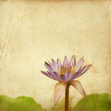 Lotus flower on old grunge Royalty Free Stock Photography