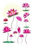 Lotus flower pattern set Stock Images