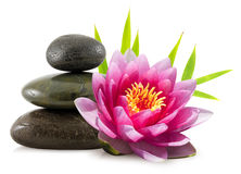 Lotus flower and pebbles royalty free stock photography