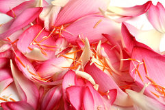 Lotus flower petals Stock Photos