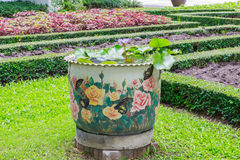 Lotus flower pots Stock Photos